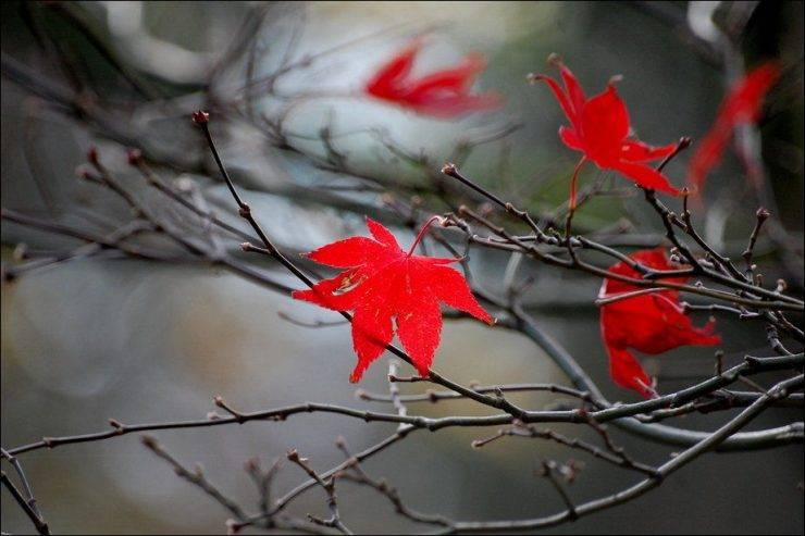 Barwy jesieni 14